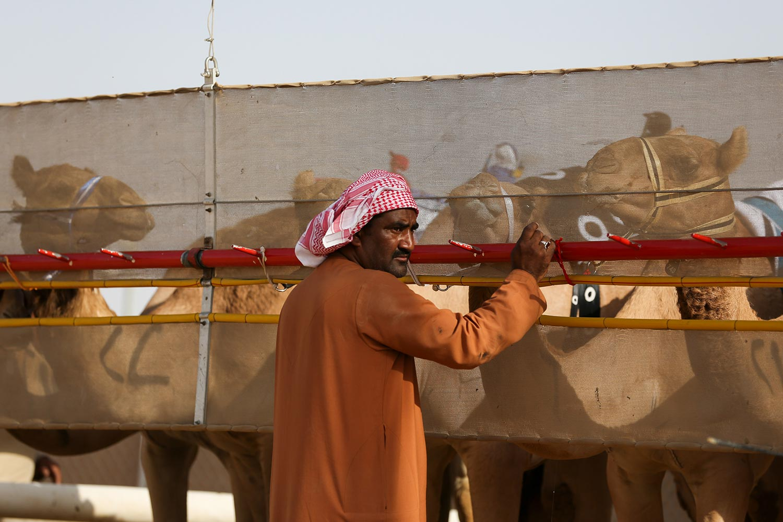 Tom Weller Fotojournalist Report Dubai Camel Race Kamele